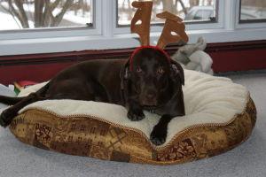 Cody_the_Reindeer